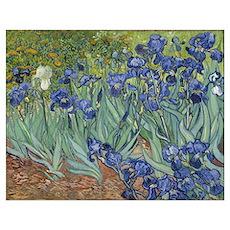 Van Gogh - Irises Poster