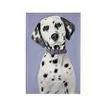 Dalmatian Rectangle Magnet (10 pack)