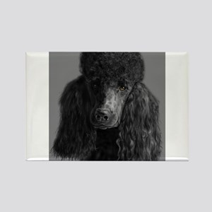 standard poodle black Magnets