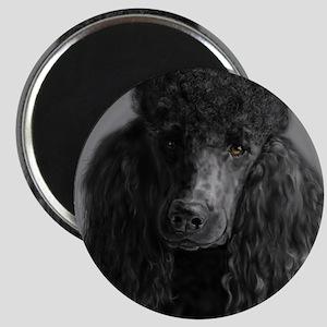 standard poodle black Magnets
