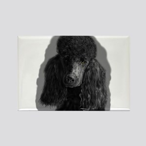 black standard poodle Magnets