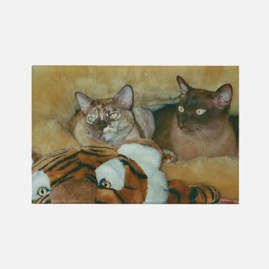 Burmese Cats Magnets