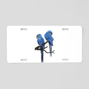 Hyacinth macaws Aluminum License Plate