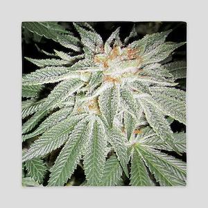 White Kush Cannabis Queen Duvet
