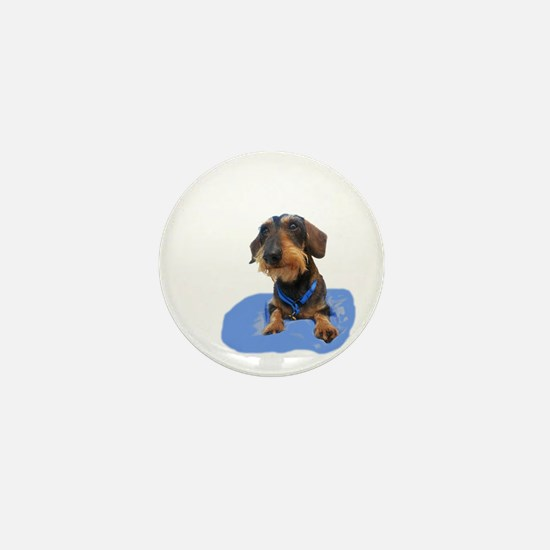 Wirehair Dachshund Mini Button