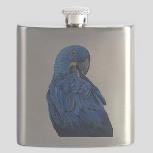 Hyacinth Macaw portrait Flask