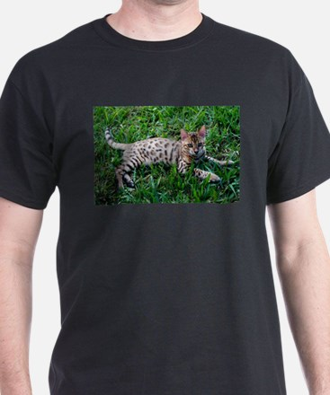 Unique Cat photos T-Shirt
