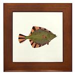 Starry Flounder Framed Tile
