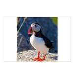 Atlantic Puffin Standing Postcards (Package of 8)