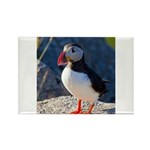 Atlantic Puffin Standing Magnets