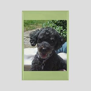 Black Miniature Poodle Rectangle Magnet