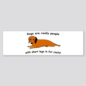 Dachshund Dogs Fur Coat Bumper Sticker