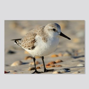Sand Piper and Seashells Postcards (Package of 8)
