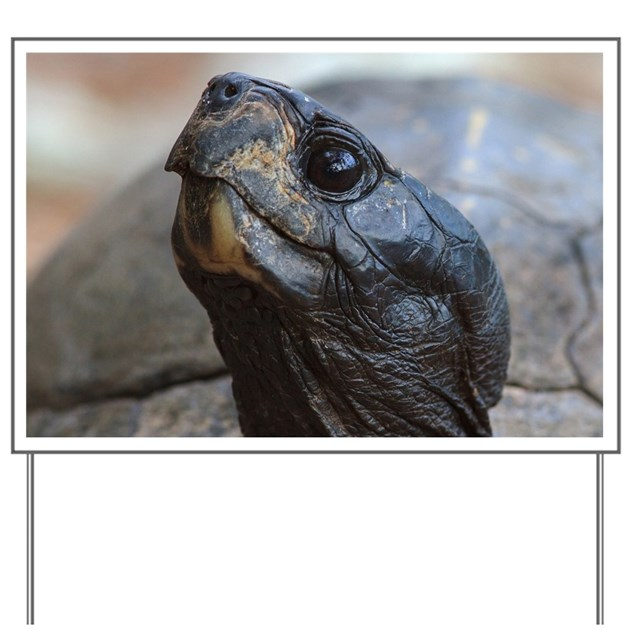 Gopher In Backyard: Gopher Tortoise Yard Sign By Listing-store-16564703