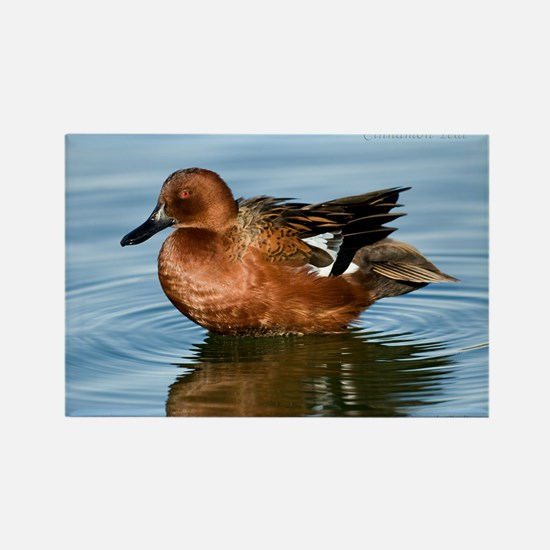 Cinnamon Teal Duck Rectangle Magnet Magnets