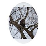 Winter Maple Island Bald Eagle Ornament (Oval)