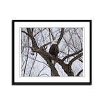 Winter Maple Island Bald Eagle Framed Panel Print