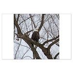 Winter Maple Island Bald Eagle Posters