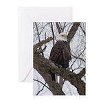 Winter Maple Island Bald Eagle Greeting Cards