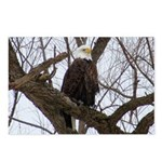 Winter Maple Island Bald Eagle Postcards (Package