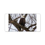 Winter Maple Island Bald Eagle Aluminum License Pl