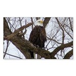 Winter Maple Island Bald Eagle Sticker