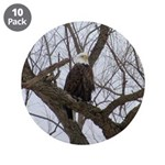 Winter Maple Island Bald Eagle 3.5