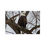 Winter Maple Island Bald Eagle Magnets