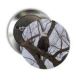"""Winter Maple Island Bald Eagle 2.25"""" Button (100 p"""