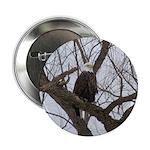 "Winter Maple Island Bald Eagle 2.25"" Button (10 pa"