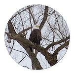 Winter Maple Island Bald Eagle Round Car Magnet