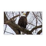Winter Maple Island Bald Eagle Rectangle Car Magne