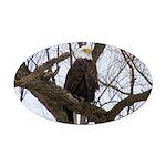 Winter Maple Island Bald Eagle Oval Car Magnet