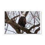 Winter Maple Island Bald Eagle Car Magnet 20 x 12
