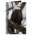 Winter Maple Island Bald Eagle Journal