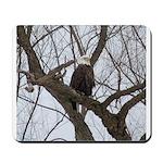 Winter Maple Island Bald Eagle Mousepad