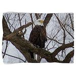 Winter Maple Island Bald Eagle Pillow Sham