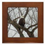 Winter Maple Island Bald Eagle Framed Tile