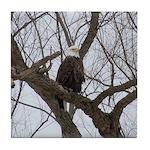 Winter Maple Island Bald Eagle Tile Coaster