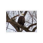Winter Maple Island Bald Eagle 5'x7'Area Rug