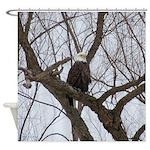 Winter Maple Island Bald Eagle Shower Curtain