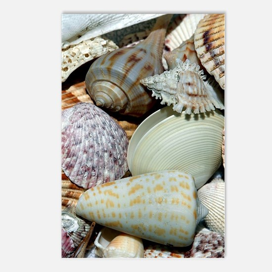 Colorful Seashells Postcards (Package of 8)