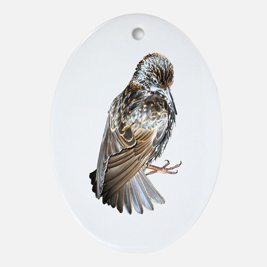 Iridescent Starling Oval Ornament