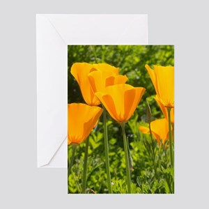 California Poppy Choir Greeting Cards (Pk of 20)