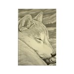 Shiba Inu Dog Rectangle Magnet (100 pack)