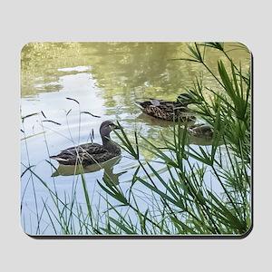 Ducks On a Reflection Pond Mousepad