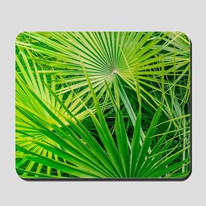 Fan Palm Forest Mousepad