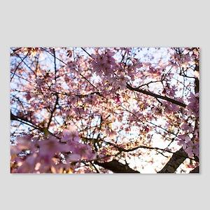 Bursting Pink Spirng Postcards (Package of 8)
