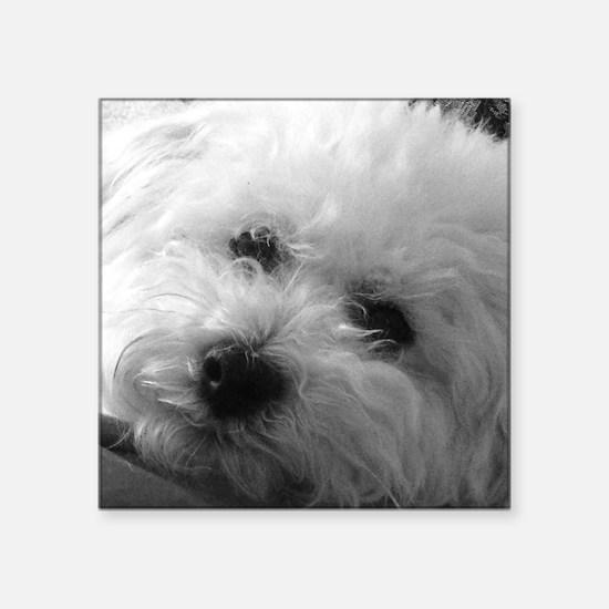 "Cute Poodles Square Sticker 3"" x 3"""