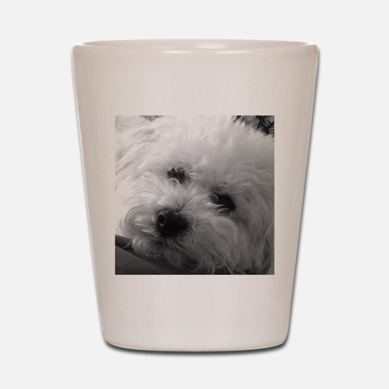 Unique Bichon Shot Glass